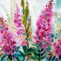 Willowherb, maitohorsma